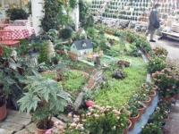 2018-01-14花と泉の公園ベゴニア館184