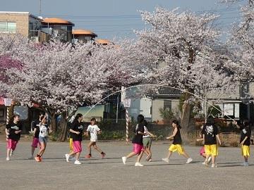11 鴻巣公園の桜