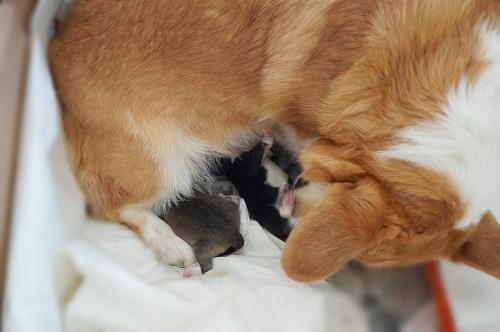 メリー出産