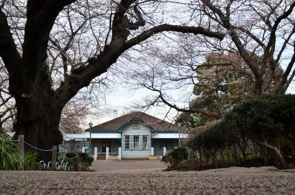 山手桜13