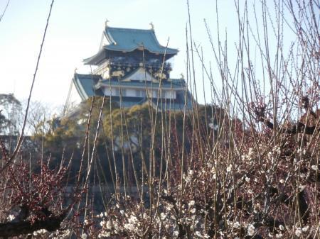 大坂城と梅
