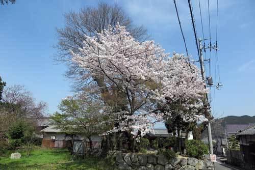 180329春日神社