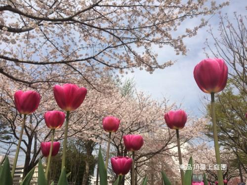 fesuharu4.jpg