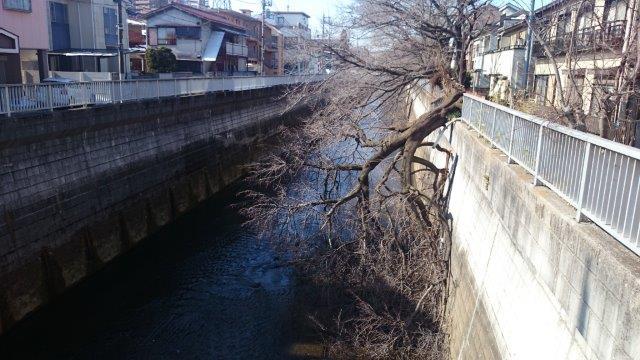 桜倒木 (2)