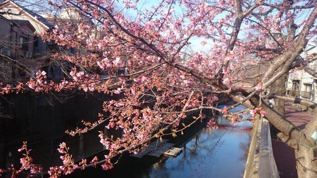 桜にメジロ (2)