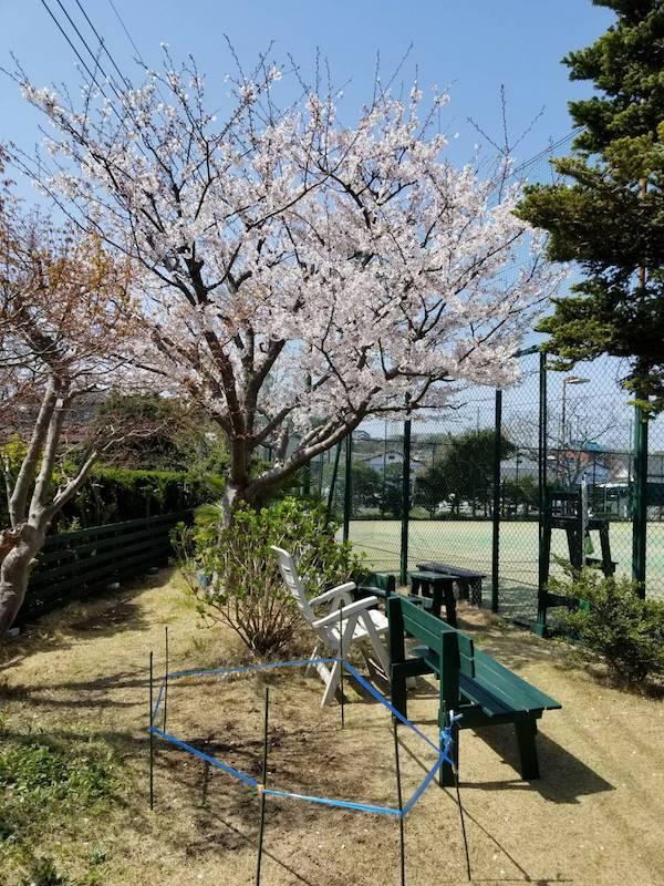 0401_sakura.jpg