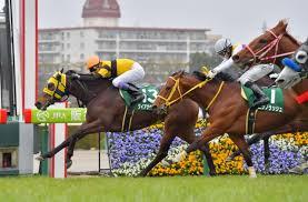 【高松宮記念】ダイアナヘイロー 鞍上は松山弘平騎手に決定