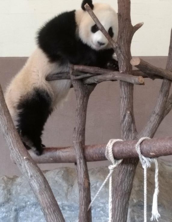登り2パンダ