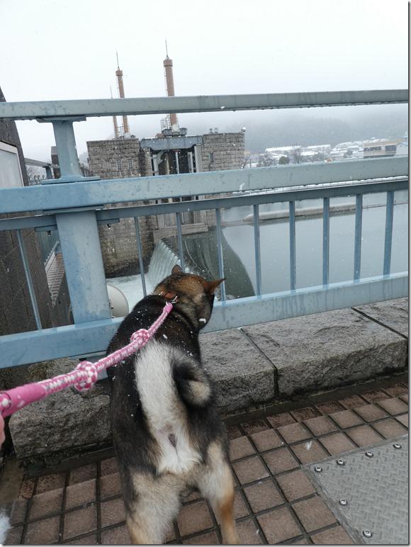 20171217福井雪03-30