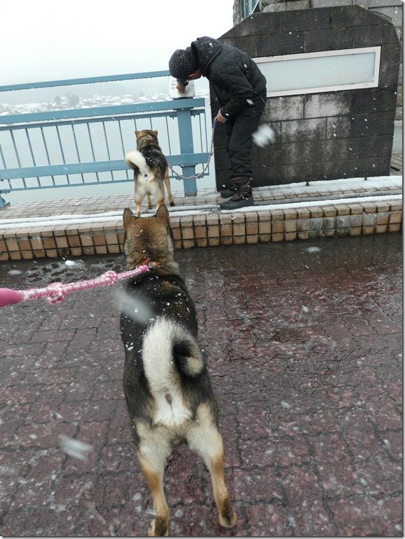 20171217福井雪03-32