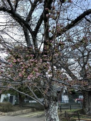 桜180323SK1