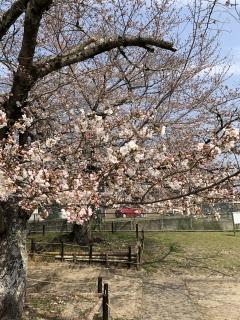 桜180326SK3