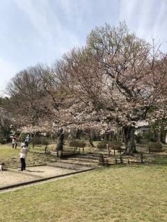 桜180326SK4