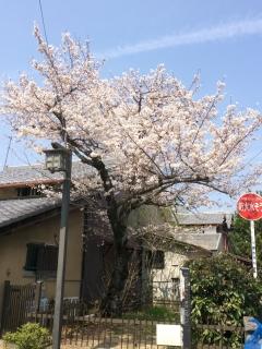 桜180326KO1