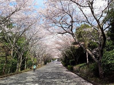 20180401_103343 桜