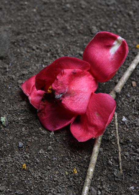 落花の美03