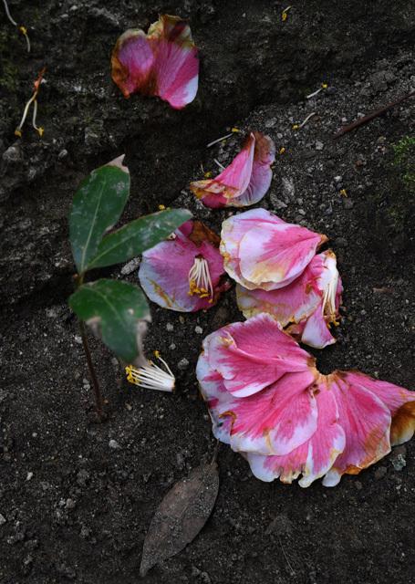 落花の美04