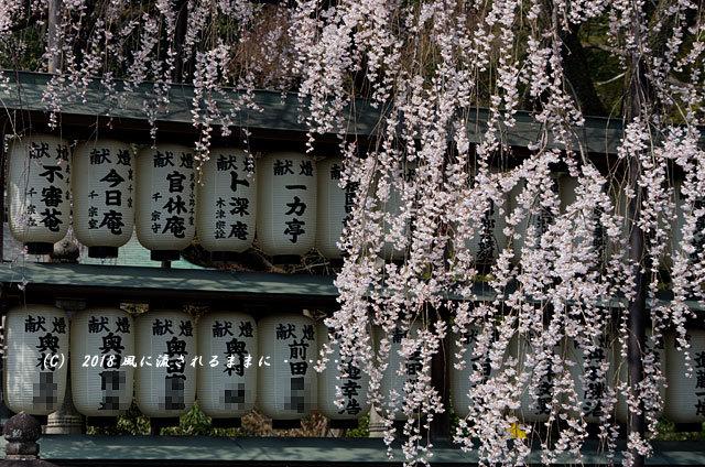 京都・大石神社 大石桜 2018年3月25日撮影1