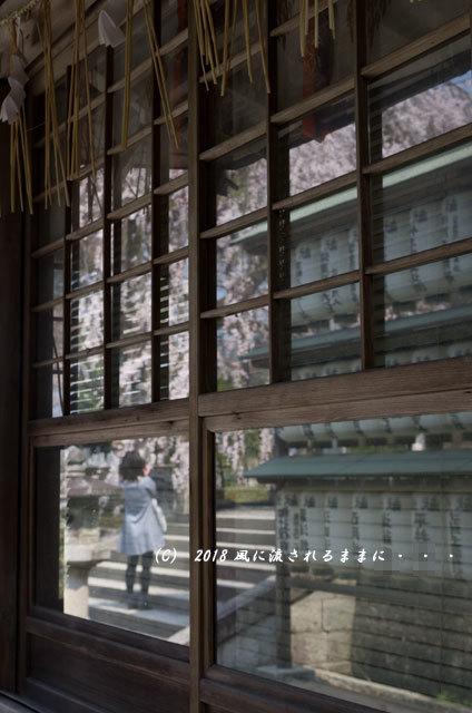 京都・大石神社 大石桜 2018年3月25日撮影11