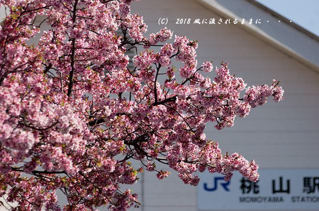 京都・JR桃山駅 早咲きの桜 2018年3月17日撮影1