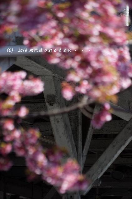 京都・JR桃山駅 早咲きの桜 2018年3月17日撮影6