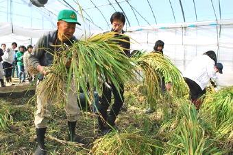 4551-340新米収穫