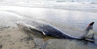 4721-340クジラ
