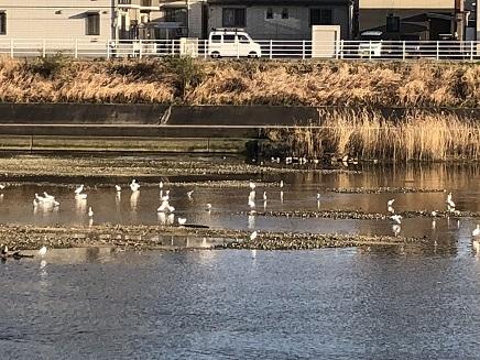 3142018 Walking黒瀬川S4