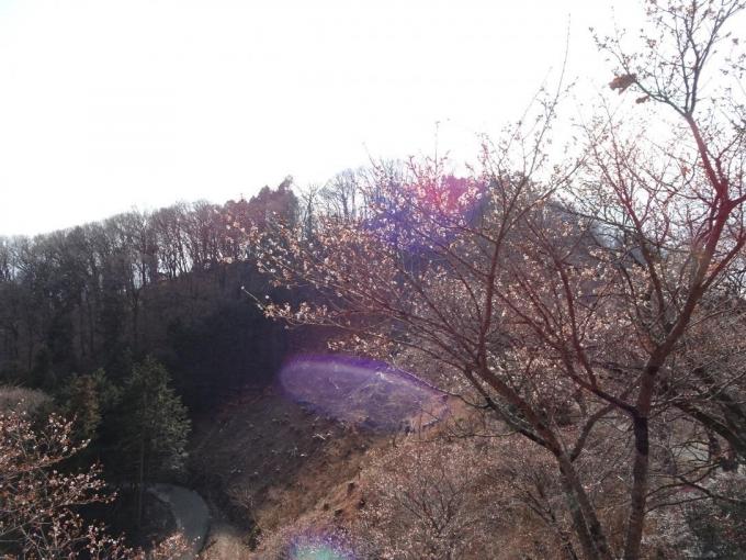 冬桜と御荷鉾山