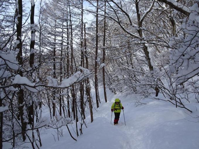 モフモフの登山道