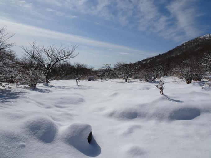 荒山高原の雪景色