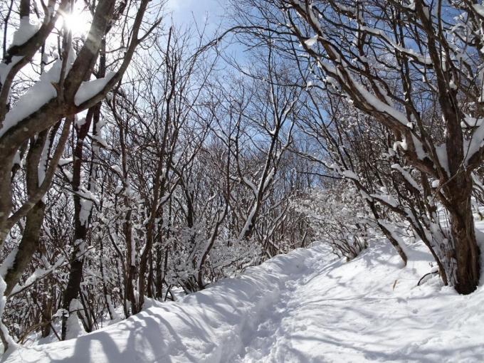 モフモフの南面登山道