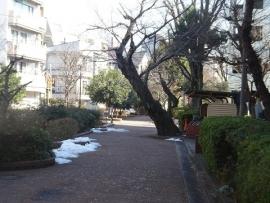 遊歩道の雪
