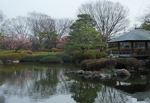 日本庭園梅