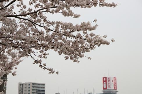 桜と本町のラウンドワン