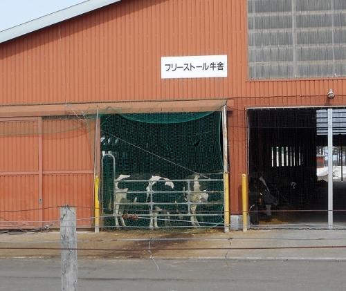 酪農学園 フリーストール牛舎