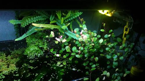 入れた憶えのない植物(6)