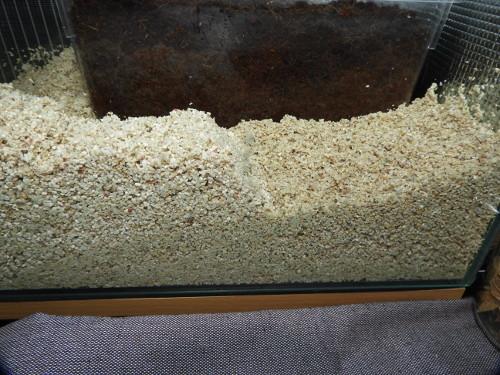 オカヤドカリ水槽リセット(10)