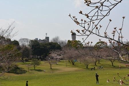 桜春日公園②