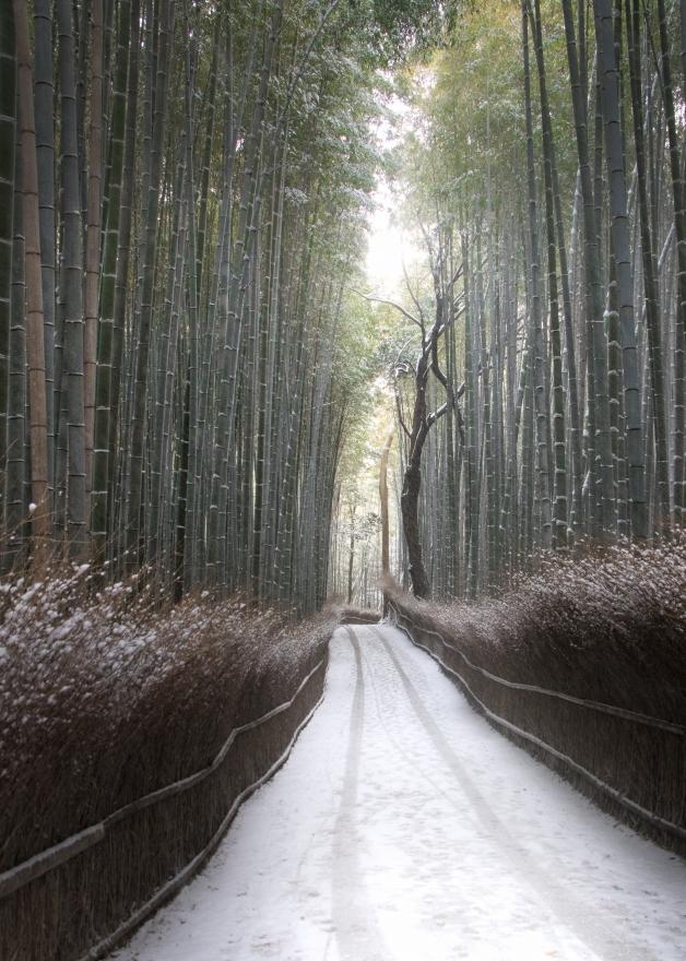嵯峨野の竹林の小径