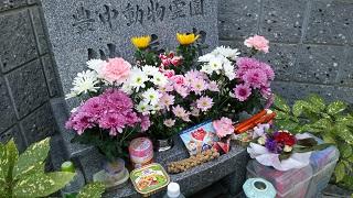 2shu-kan4-2.jpg
