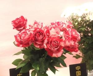 斑入りの赤いバラ