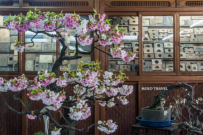 大和な雛祭 菊屋さん--桜と和菓子の型