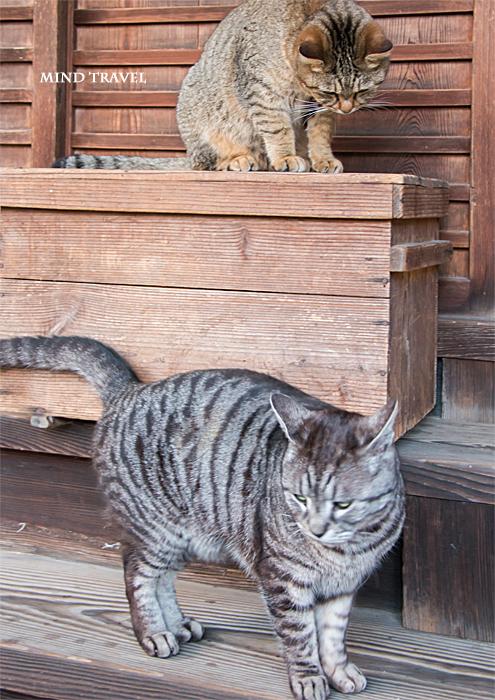 梅宮大社 猫2匹
