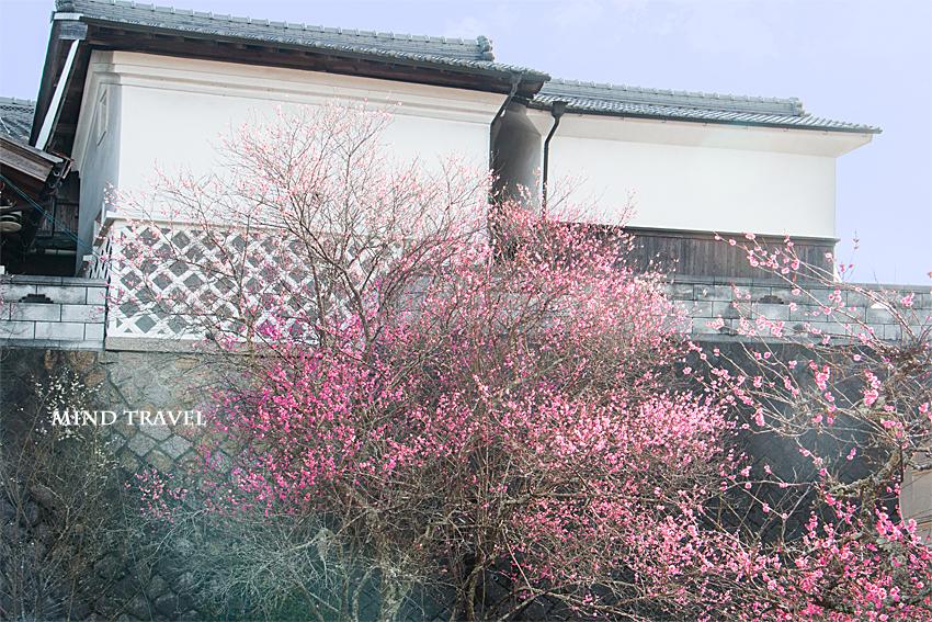 月ヶ瀬-なまこ壁の家 紅梅