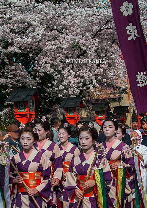 平野神社 桜祭神幸祭 市松模様の着物