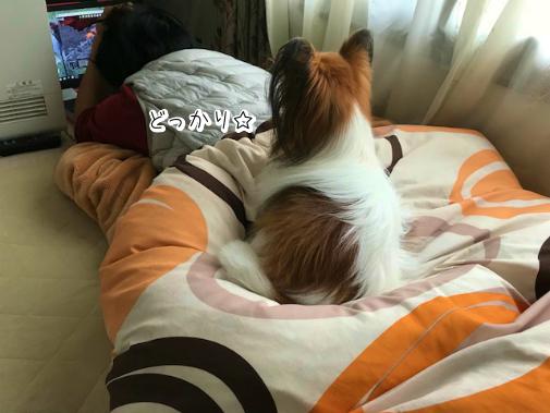 SYewiC_O20180219-2.png