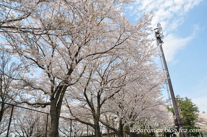11野木町総合運動公園