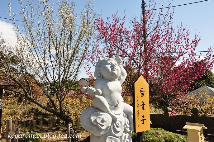 雷電神社の梅と蝋梅6