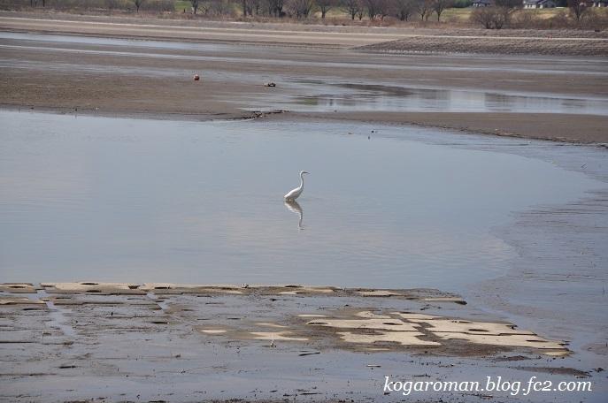 谷中湖は干し上げ期3